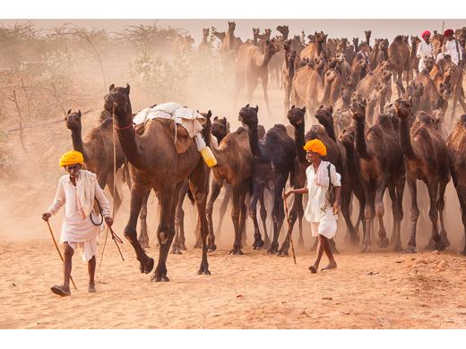 Camel Herdsmen